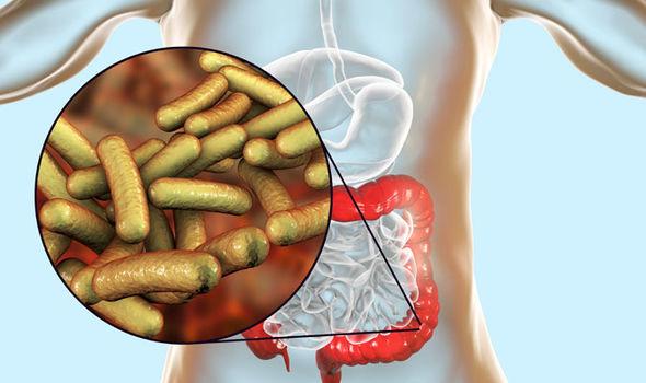 Симптоми на шигела: Бактериална инфекция в стомаха